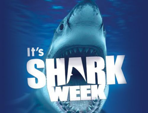 It's SHARK WEEK at The Pool Shoppe: July 29 to August 4, 2019